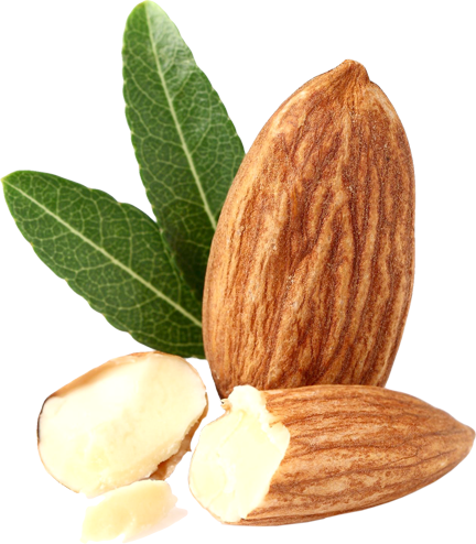 Almond Sm Isolated copy
